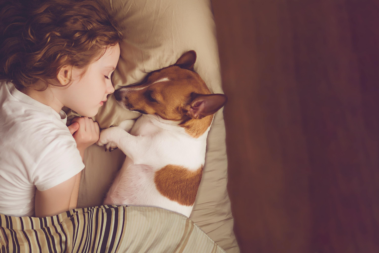 Lemmikkiystävällinen koti